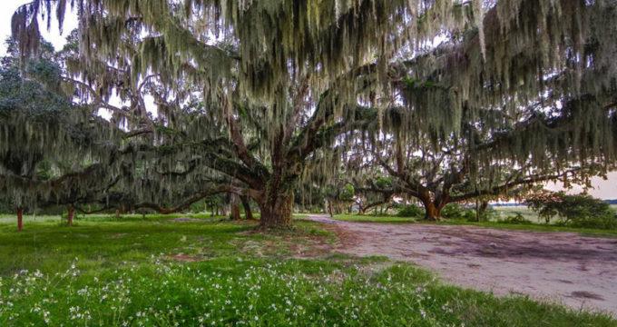 whitehall park