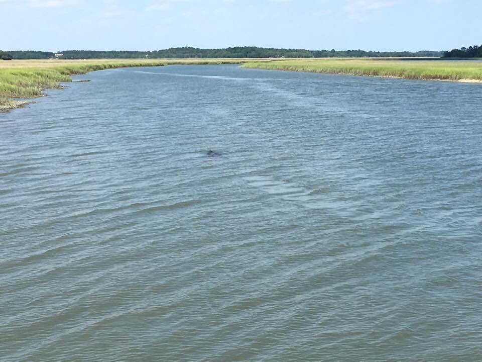 Manatee spotted near Cat Island, SC by John Troutman