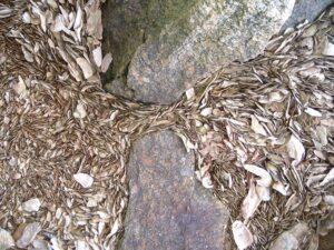 Lowcountry Estuarium