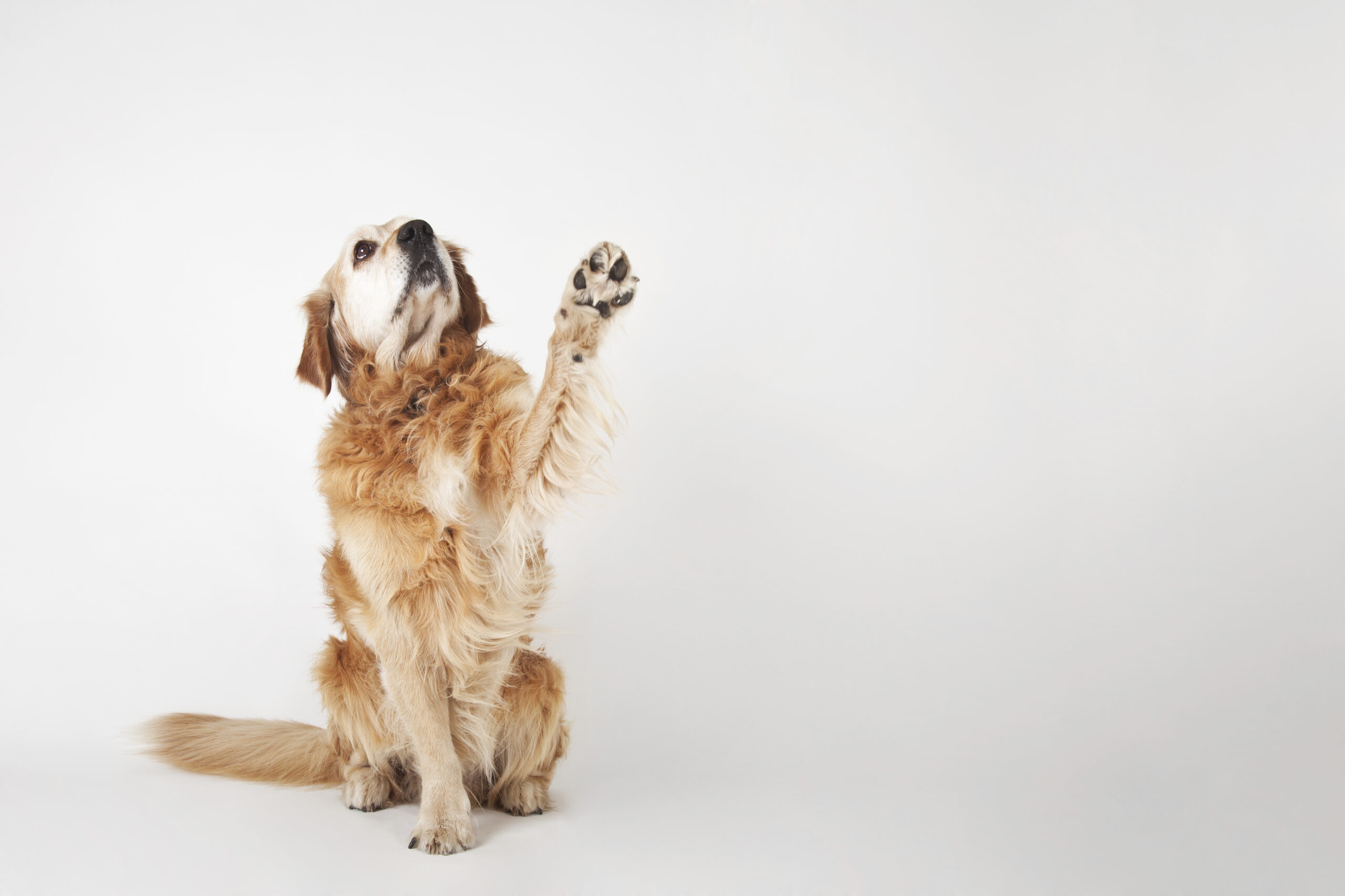 Are You Contributing to Your Dog's Psychosis?