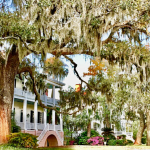 Spanish Moss on Bay Street in Beaufort, SC - Photo by Ginger Wareham