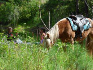 Camelot Farms Equestrian Center