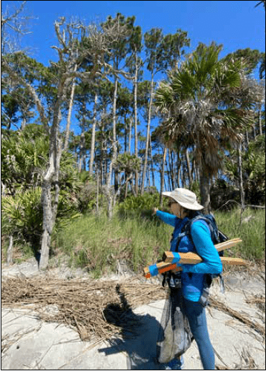 Turtle Team : Pritchards & Capers Island, Beaufort South Carolina